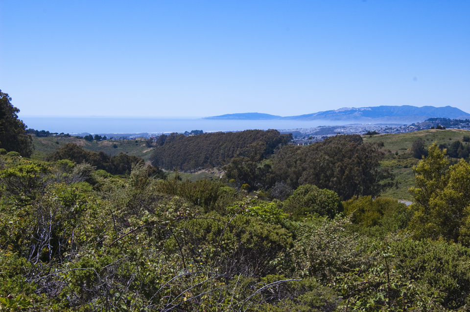 Green Spaces of San Francisco