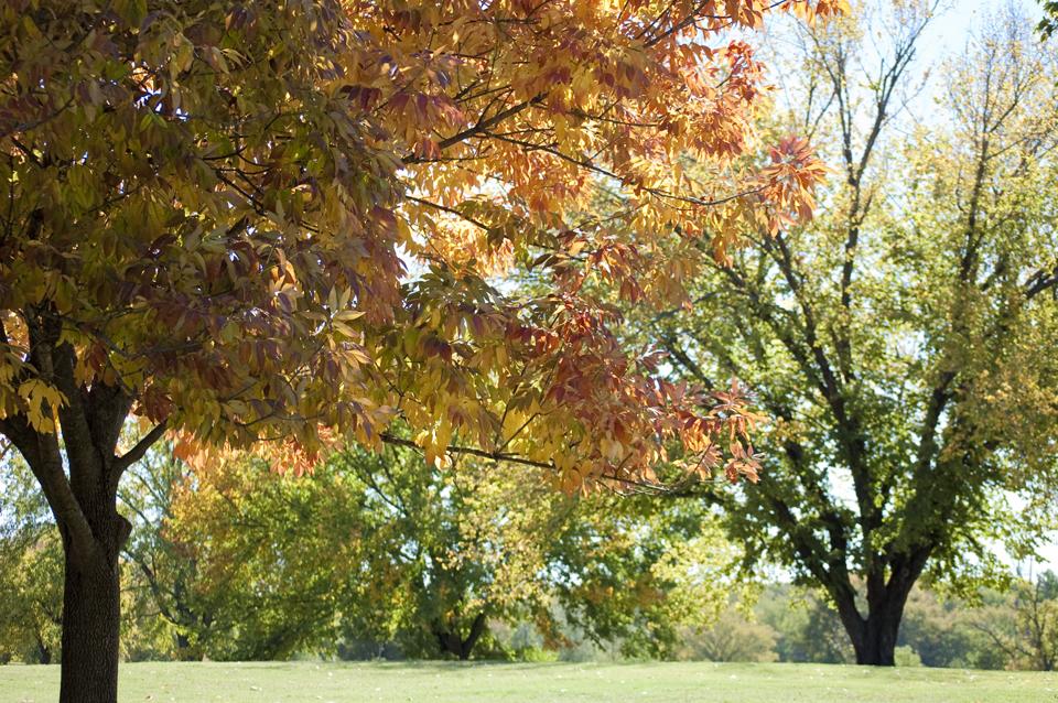 Fall Foliage in Tulsa, OK